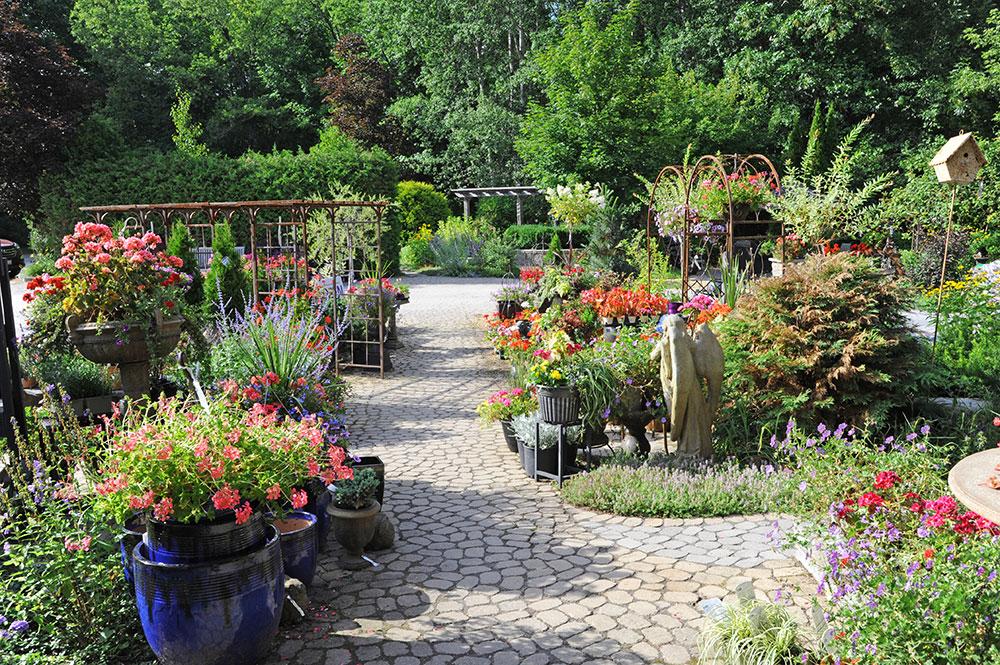 Garden Centre Newmarket Aurora King Pathways to Perennials