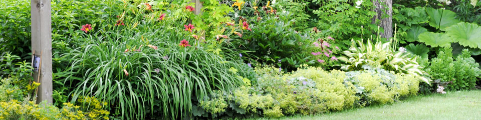 perennial-garden-design-part-sun